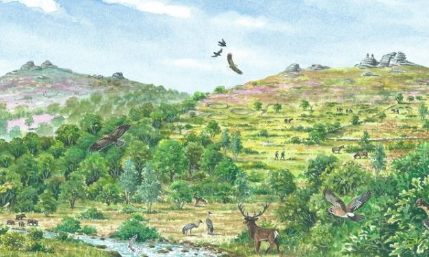 A wilder vision for Dartmoor revealed