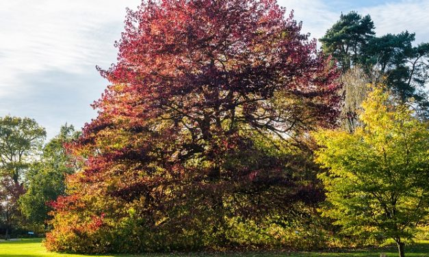 RHS Garden Wisley boasts more than 100 Champion Trees