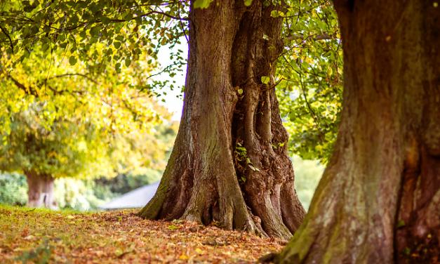 Tree Production Innovation Fund