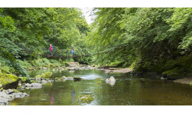 Riverbanks and watercourses to be planted with thousands of hectares of new woodland to improve water quality and biodiversity