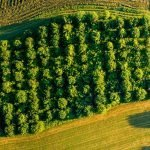 Wee Forests to leave living legacy for COP26 in Glasgow