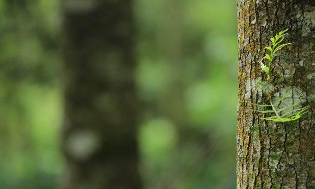 Right tree, right place, right reason