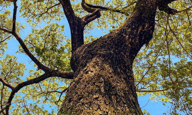 Forestry Commission act on new tree disease found in Cornwall