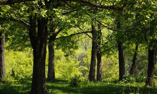 More than 8,000 trees to be planted in the Chichester District this winter