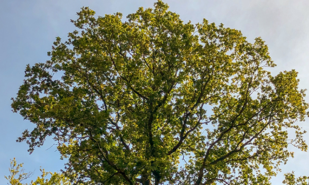 Forestry Commission simplify felling licence applications to protect trees and people